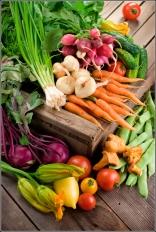 Organic Market Produce