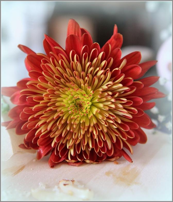 Red Flower, Courtesy Dena T Bray Ⓒ